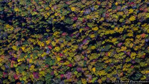 Autumn Colors by the Asheville Watershed in the Blue Ridge Mountains