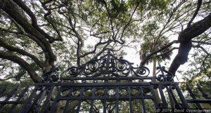 Charleston Park and Ironwork