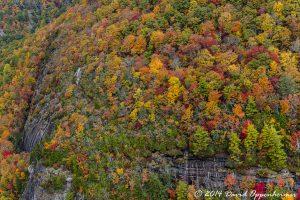 Nantahala National Forest Fall Colors