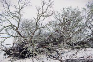 Driftwood on North Island on Winway Bay South Carolina