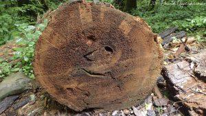 Smiley Face in Log in Joyce Kilmer Memorial Forest