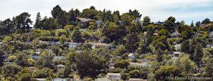 Ross California Real Estate