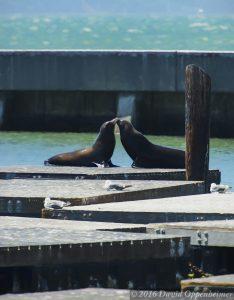 Sea Lions at Pier 39 Marina at Fisherman's Wharf