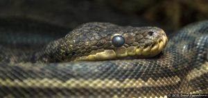 Snake at The Bronx Zoo World of Reptiles
