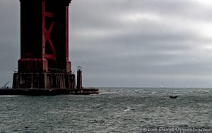 Whale at Golden Gate Bridge
