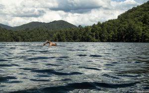 Lake Santeetlah Swimming